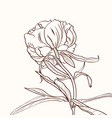 peonies brown sepia outline on beige background vector image