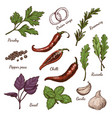 set of different color spices and herbs vector image