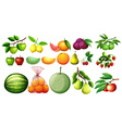 Different kind of fruits vector image