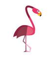 exotic animal swan vector image vector image