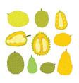 exotic tropical fruits jackfuit set hand drawn vector image