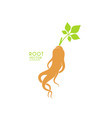 ginseng plant vector image