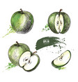 green apple hand drawn set vector image