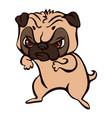 pug fight icon cartoon style vector image
