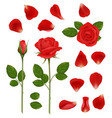 red roses beautiful romantic flowers buds vector image