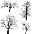 walnut and chestnut trees vector image vector image