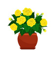 begonia house plant in flower pot vector image vector image
