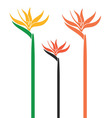 Bird of Paradise vector image vector image