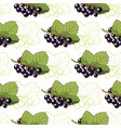currant seamless pattern vector image