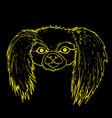 muzzle pekingese dog yellow color outline vector image