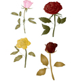 Isolated Roses vector image