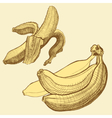 Bananas engraving drawing Fruit and food themes vector image vector image