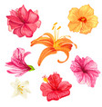 hibiscus and lily flowers vector image vector image