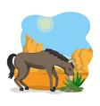 horse on desert vector image vector image