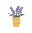 lavender in flower pot icon vector image vector image