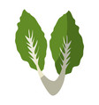 lettuce vegetable icon vector image vector image