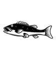 perch fish design element for poster emblem sign vector image vector image