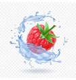 ripe raspberry sweet berry and water splash vector image vector image