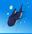 shark in the water vector image