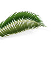 2d realistic palm leaf on white background vector image vector image