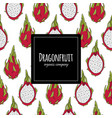 dragonfruits seamless pattern for your design vector image vector image