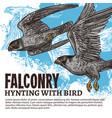 falconry hunting wild falcon birds vector image vector image