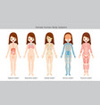 female human anatomy body systems vector image