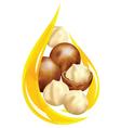 macadamia oil vector image vector image