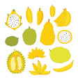 exotic colorful tropical fruits collection vector image