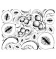 hand drawn background of casaba melon and crabappl vector image