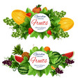 harvest and garden fruits food vector image vector image
