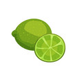 fresh juicy lime fruit cartoon vector image vector image