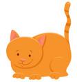 funny yellow cat cartoon animal character vector image vector image