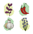 set herbs and spices plants and organ food vector image vector image