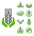 cereal ears and grains agriculture industry vector image