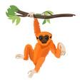 gibbon primate mammal monkey in wildlife vector image vector image