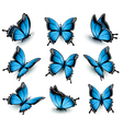 set beautiful blue butterflies vector image vector image