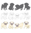 set of images of pug isolated objects on a white vector image vector image
