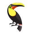 toucan parrot icon cartoon style vector image vector image