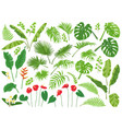 tropical leaves and flowers big set vector image vector image