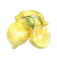 vegetable vitamin vegetarian painting watercol vector image vector image