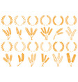 wheat or barley ears harvest wheat grain growth vector image