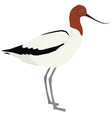 birds collection red-necked avocet vector image vector image