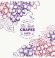 grape berry design template hand drawn vector image vector image