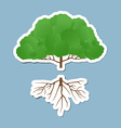 gree tree with root vector image vector image