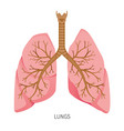 lungs human internal organ diagram vector image vector image