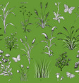 seamless pattern with hand drawn field herbs and vector image