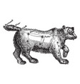 ursa major vintage vector image