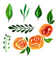 watercolor floral elements vector image vector image