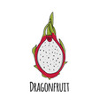 dragonfruit sketch for your design vector image vector image